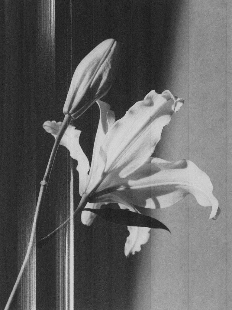 flower black white lily by Michèle Margot
