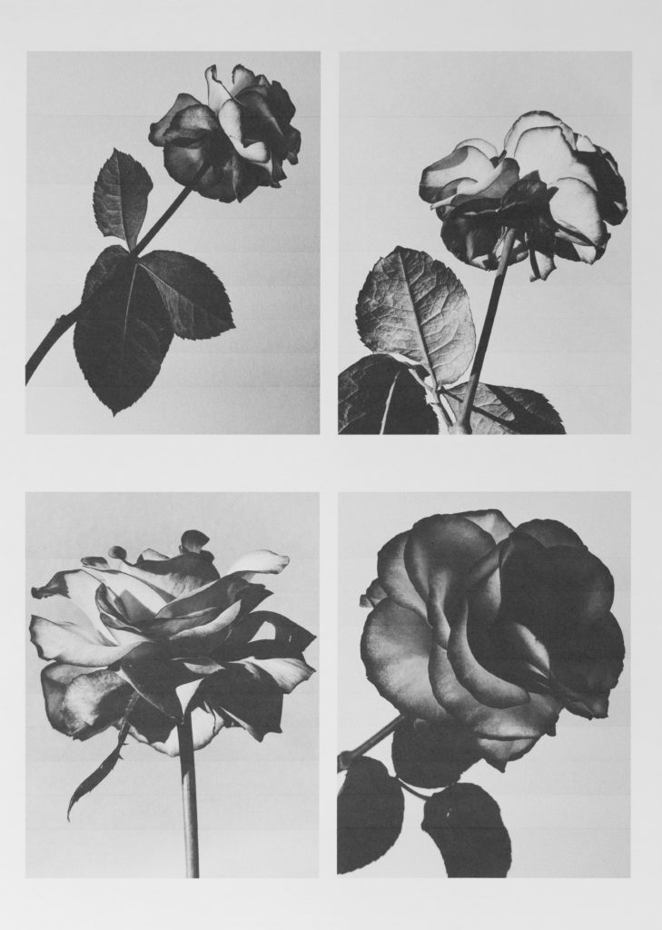 I print flowers so they will not die by Michèle Margot iprintflowerssotheywillnotdie